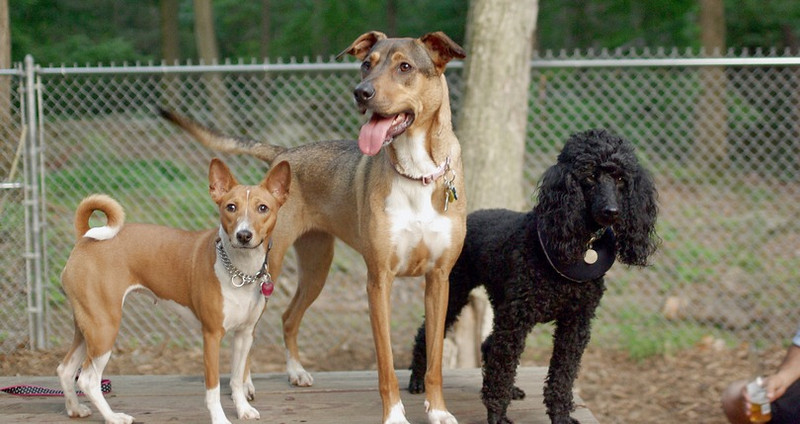 Roxy, Chloe, Jet_1