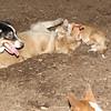 Joey (pup, 1st time), Hazel (pup)_4