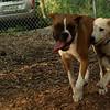 LUCAS, RUBY (pups)_1