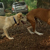 LUCAS, RUBY (pups)_2