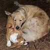 Joey (pup, 1st time), Hazel (pup)_8