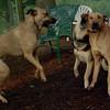 Divot, buffy, maddie (the girls)_1