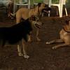 Buffy, Divot, Maddie (the girls)_5