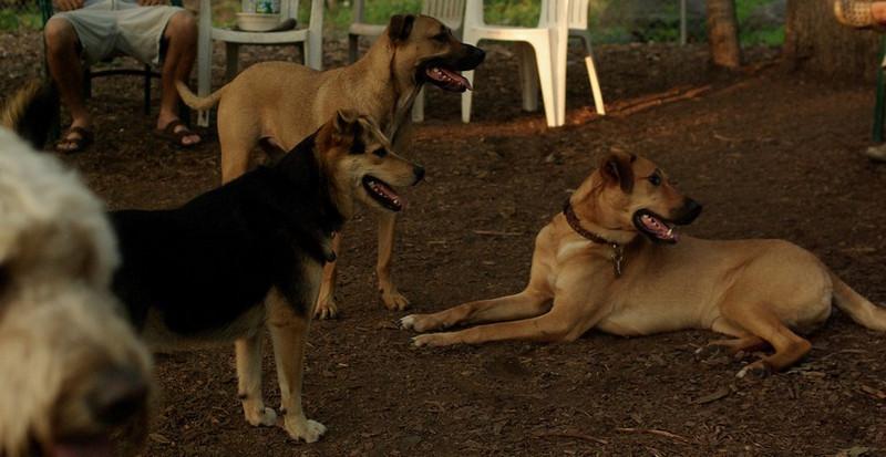 Buffy, Divot, Maddie (the girls)_4