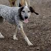 LULU (hound pup)_8