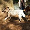 LULU (hound pup)_3