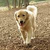 HAZEL (pup)_2