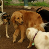 Atlas, Cali, april, sammy_1