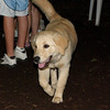 ELLIE (NEW, golden PUPPY)_13