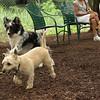 buddy (cairn), trixie (new), Maddie_1