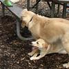 HAZEL & MOLLY (pups)_1