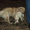 HAZEL & MOLLY (pups)_3