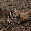 Buster & Bailey (girl)_10