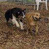 Buster & Bailey (girl)_1