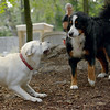 Roxy (new puppy)_69