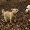 Roxy (new puppy)_28