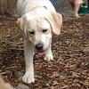 Roxy (new puppy)_6
