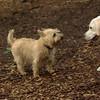 Roxy (new puppy)_27