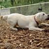 Roxy (new puppy)_56