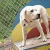 Roxy (new puppy)_34