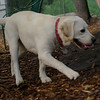 Roxy (new puppy)_3
