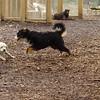 Roxy (new puppy)_64