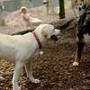 Roxy (new puppy)_72