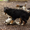Roxy (new puppy)_67