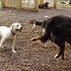 Roxy (new puppy)_65