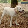 Roxy (new puppy)_58