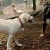 Roxy (new puppy)_71