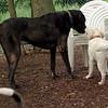 Roxy (new puppy)_61