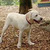 Roxy (new puppy)_59