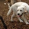 Roxy (new puppy)_24