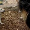 Roxy (new puppy)_55