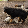 Roxy (new puppy)_68