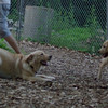 HAZEL (pup) , FRASER (pup)_2
