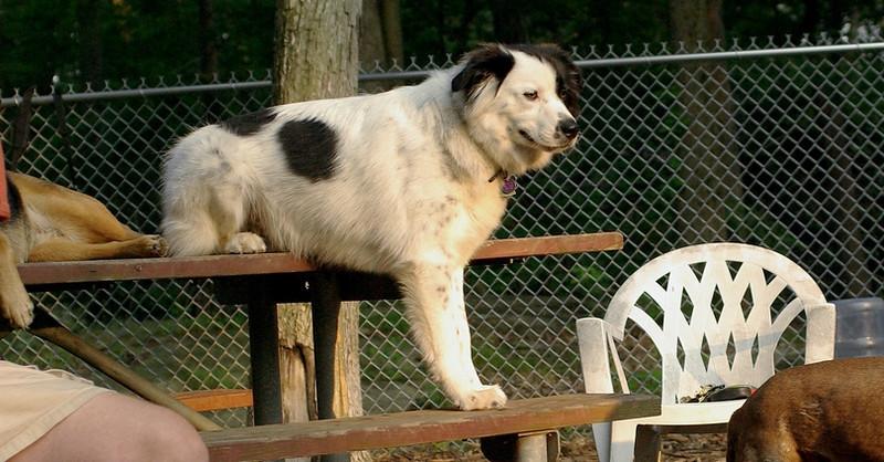 MARLEY (boy pup)_1