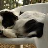 MARLEY (boy pup)_4