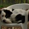 MARLEY (boy pup)_3