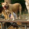 LUCY (pitbull), Maddie, Marley