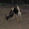MAX (10 yr  shepherd, new), ALI_3