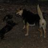 MAX (10 yr  shepherd, new), ALI_2