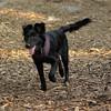STAR (small black pup)_3