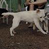 FRASER, ROXY (puppies)_9