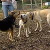 ROXY (pup) w  Maddie_1
