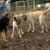 ROXY (pup) w  Maddie
