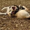 OLIVER & FRASER (puppy)