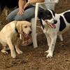 FRASER (puppie), MICKIE (pup)_4