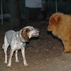 LULU (hound)_1